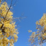 Fall sky.