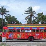 Tourist Bus/Shuttle