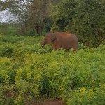 Photo of Udawalawe National Park