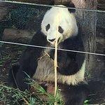 Foto de San Diego Zoo