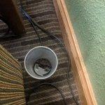 Photo de AmericInn Hotel & Suites Eau Claire