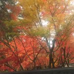 Photo de Eikan-dō
