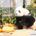 Panda from Ocean Park, HongKong.