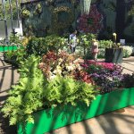 Photo of Royal Botanic Gardens