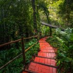 This Sustainable Path weaves through the Jungle