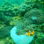Snorkeling on the North Reef suggest by Krister