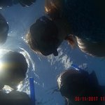 Photo of Dressel Divers