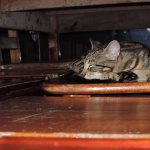 Resting under the adjacent table...  Too cute!