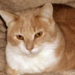 Wally, the Ginger Cat, is waiting to meet you