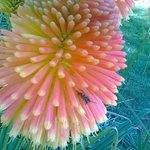 Amazing coloured flowers