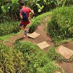 Tegalalang Rice Terrace. Steps