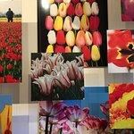 Foto de Amsterdam Tulip Museum