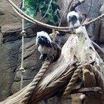 Zdjęcie Rainforest Adventures