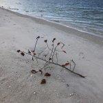 Φωτογραφία: Barefoot Beach Preserve