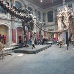 Museum für Naturkunde Foto