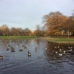 Ducks on East Park Lake