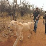 Photo of Mukuni Big 5 Safaris