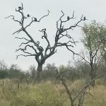 Foto de Tintswalo Safari Lodge