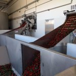 Peppers in conveyors
