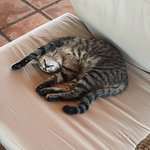 In the open conservatory that overlooks the beach the cat decided to make the chair his osn
