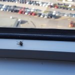 Just 1 of many flies in the hotel room