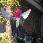 Hummingbird Statue in front of Napa River Inn, Historic Napa Mill, Napa, CA