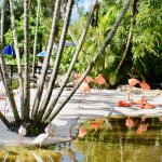 Scenic backdrops of water areas and flamingos