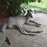 Foto de Singapore Zoo