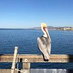 Oceanside Pier resmi