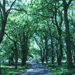 Foto de Parque Cornwall