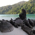 Photo de Mu Ko Surin National Park
