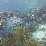 Foto de Scuba School And Family Dive Center