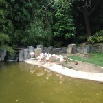 Flamingos at the Oregon Zoo