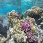 Photo of Pure Snorkeling by Reef Discovery