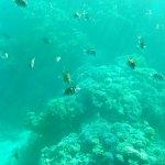 Photo of Movenpick Resort Sharm El Sheikh Naama Bay