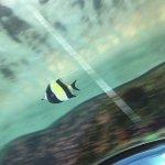 Foto de Sea Life Sydney Aquarium