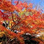 Foto van Shojiji Temple