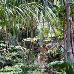 Photo of Seychelles National Botanical Gardens