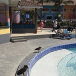 Bird spotting around the pool!