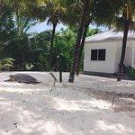 Photo de Cap Jean Marie Beach Villas