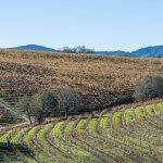 The Napa Valley