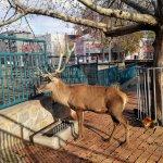 Photo of Belgrade Zoo
