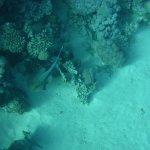 Photo of Coraya Divers