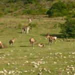 Bilde fra Gondwana Game Reserve