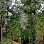 Big Thicket National Preserve, East Texas.