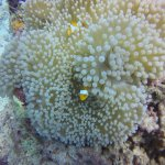 Excellente qualité de la GoPro sous l'eau