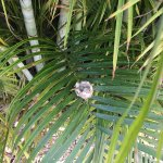 Hummingbird nest on the grounds!