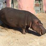 ภาพถ่ายของ Lisbon Zoo