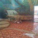 Nursing tiger feeding piglets