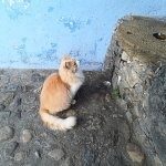 Nuestro amigo el gato Felix jejeje
